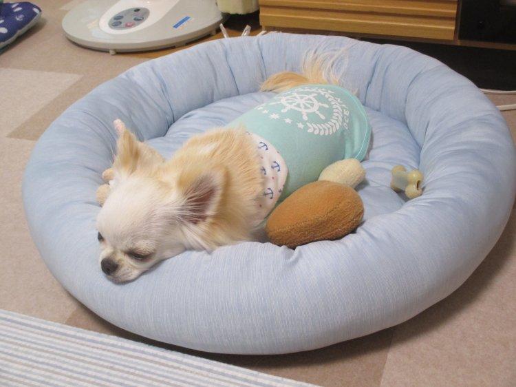 ニトリ ペット ベッド